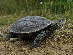 Obavijest o Javnom uvidu i izlaganju prijedloga  Uredbe o proglašenju posebnog rezervata Lokve u Majkovima
